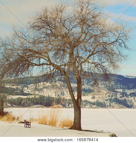 Closeup of large tree on shoreline of frozen snow covered lake with bright blue sky, white clouds and mountains in background.  Instagram effects.