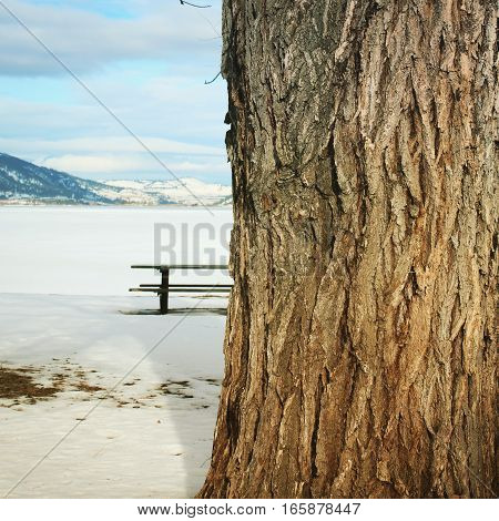 Closeup of large tree trunk with picnic table on snow covered lake shore. Mountains, snow covered lake and cloudy sky background.