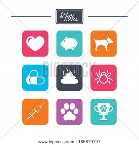Veterinary, pets icons. Dog paw, syringe and winner cup signs. Pills, heart and feces symbols. Colorful flat square buttons with icons. Vector