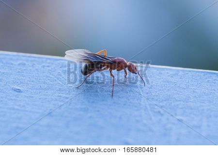 Flying ant sitting on a metal railing