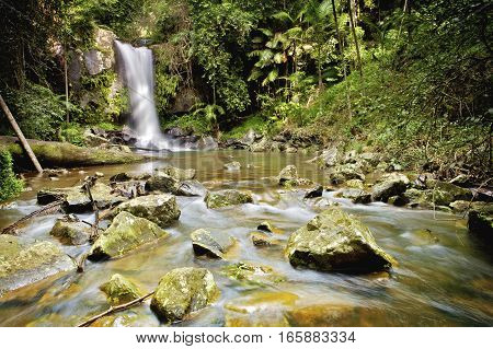 Curtis falls is a popular tourist destination on Mount Tamborine in the Gold Coast hinterland. It is only a short drive from Surfers Paradise. Gold Coast, Queensland, Australia.