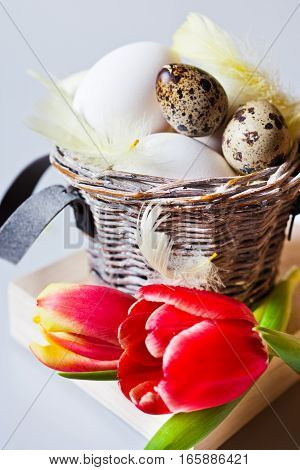 Traditional Czech easter decoration - white eggs with tulip flowers in the basket nest quail eggs and feather. Spring easter holiday arrangement.