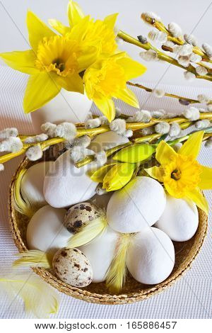 Traditional Czech easter decoration - white eggs in the basket with pussycats and daffodils flowers on white background. Spring easter holiday arrangement.