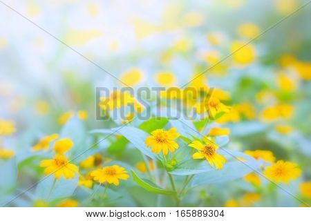 beautiful yellow flowers made with color filters