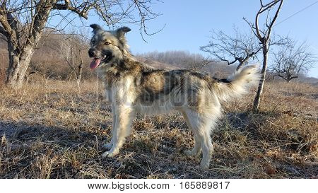 Cute young dog looking far with tongue out