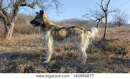 Cute young dog on the hill. Dog looking far