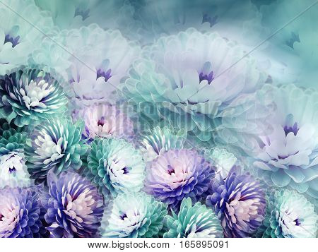 flowers chrysanthemum on blurry background. turquoise-blue-violet background. floral collage. flower composition.