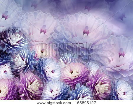 flowers chrysanthemum on blurry background. blue-violet-pink background. floral collage. flower composition.