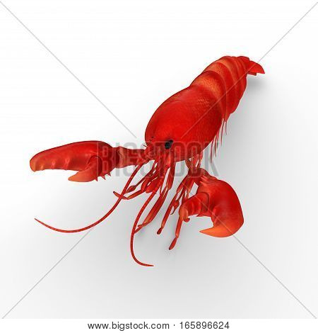 Clawed lobsters comprise a family of large marine crustaceans.