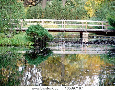 The Bridge in  Japanese Garden in the Fall