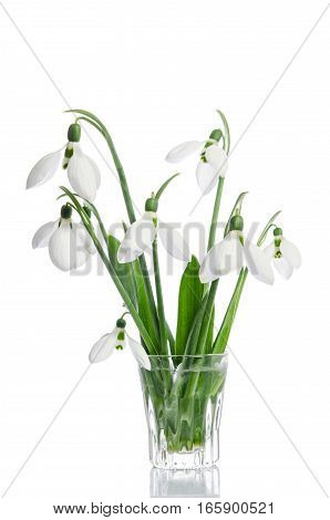 Bouquet Of Snowdrop Flowers In Glass Vase