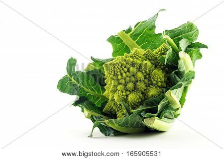 Romanesco broccoli or Roman cauliflower isolated on a white background green vegetable organic and healthy bred near Rome