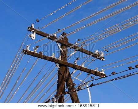 sparrows sit on iced over wires of a power line
