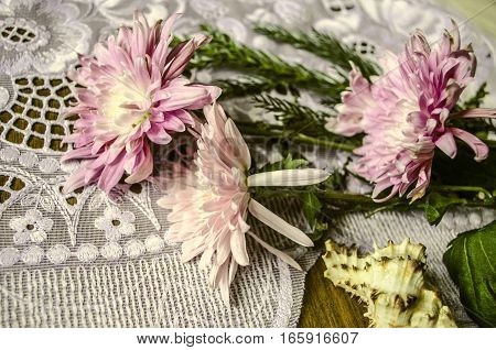 Pink asters with coniferous sprig and sea shell on lacy napkin are on dark wooden table