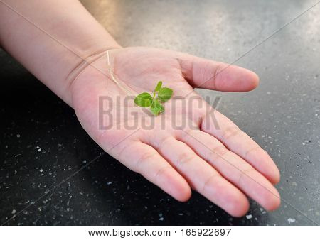 Ecology and Environment Concept Green Young Plant in An Open Hand Take to Growing in A New Place.
