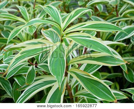 Background Pattern Dracaena Plant or Yucca Tree in Terracotta Flowers for Garden Decoration.