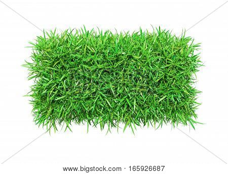 Green grass, isolated on white background. 3D illustration