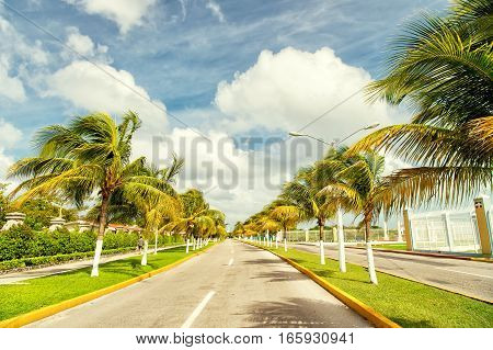 Exotic highway grey road with green palm trees in sunny windy weather outdoor on blue sky with white clouds background cozumel mexico