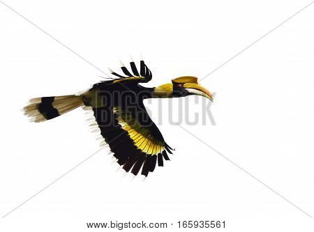 Bird (Hornbill) isolated on  a white background