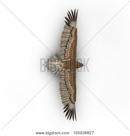Gurney Eagle on white background. 3D illustration