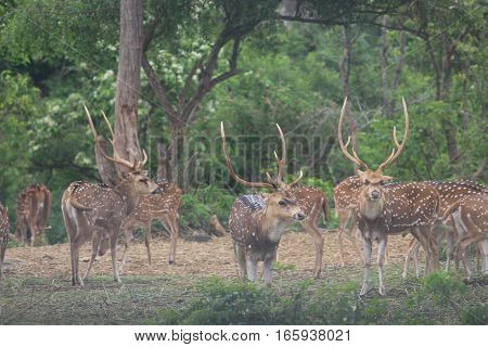 group of beautiful deer in the forest  wild animals