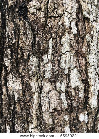 close up dry crack bark tree texture