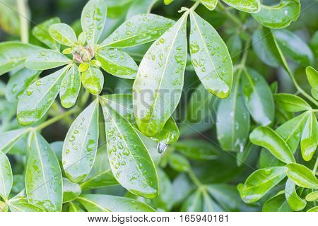 A hedge with small drops of water
