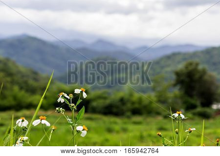 Close Up Of Flower On Landscape Of Mountain Background