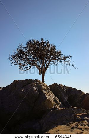 desert, green, nature, environment, dry, dirty, cloud, sky, landscape, natural, environmental, flora, ecology, eco, earth, ecological, drought, disaster, concept, color, background, alone, conservation, crack, dead, day, danger, dramatic, grow, success, s