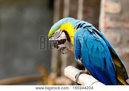 Parrot Sitting And Eating