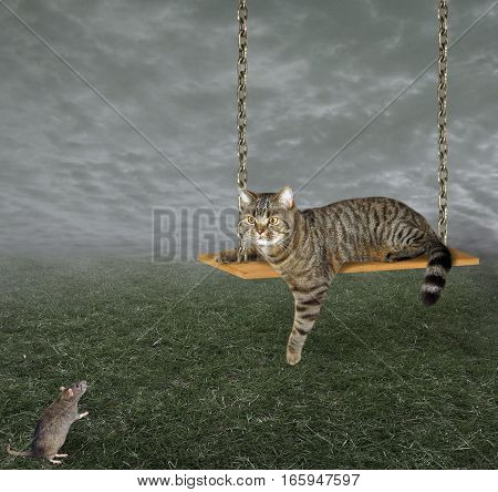 The cute cat rides on a swing. A rat is staring at him.