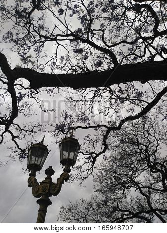 Old fashioned street lamp and blooming jacaranda tree