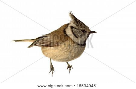 european crested tit isolated over white background ( Lophophanes cristatus )