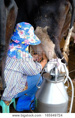 The Milkmaid by farmers hands at Thailand