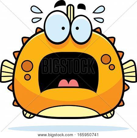 Scared Little Blowfish