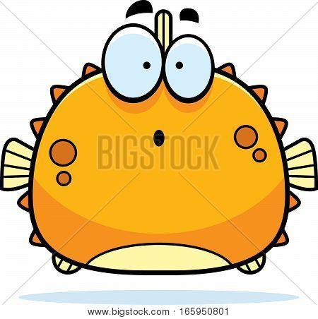 Surprised Little Blowfish