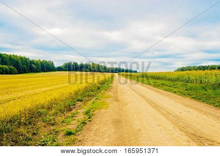 View of the road in the field field on a summer day
