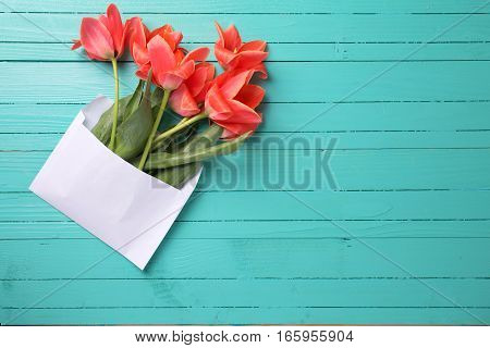 Fresh coral tulips in white envelope on turquoise wooden background. Selective focus. Place for text.