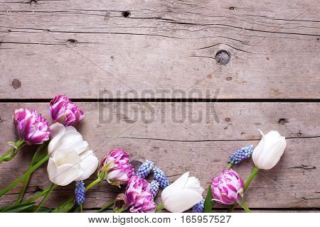 Border from violet and white tulips and muscaries flowers on aged wooden background. Selective focus. Place for text. Flat lay still life.
