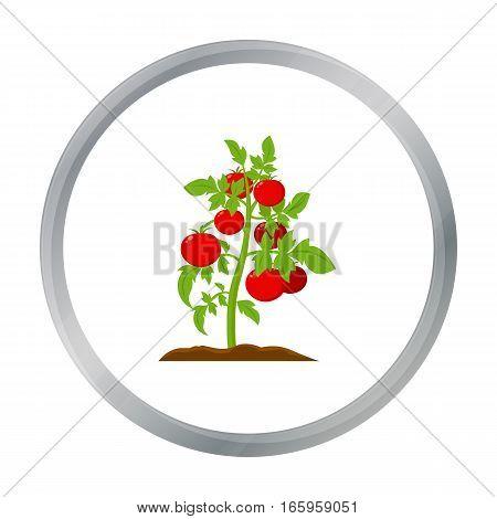 Tomato icon cartoon. Single plant icon from the big farm, garden, agriculture cartoon. - stock vector