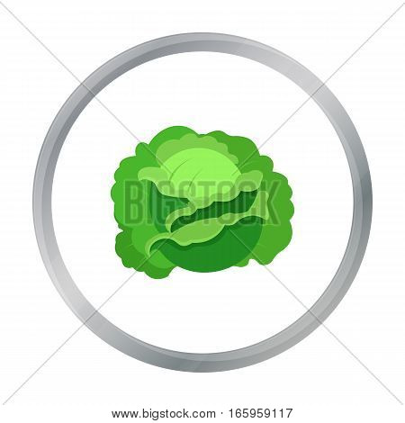 Cabbage icon cartoon. Single plant icon from the big farm, garden, agriculture cartoon. - stock vector