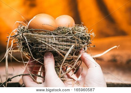 Birds nest full of chicken eggs holded up by human hands