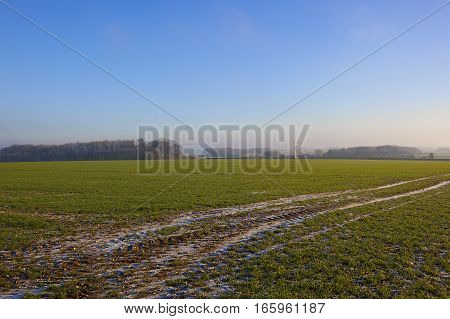 a green wheat field with remnants of snow fall in tyre tracks with a wind turbine and woodland in a yorkshire wolds landscape under a clear blue sky in winter