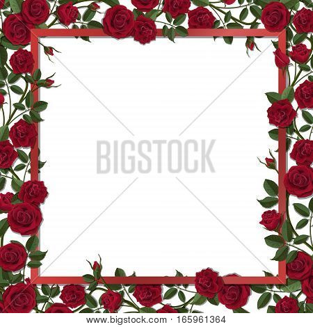 Square frame overgrown red blossom rose flowers. Vector template for greeting card wedding or Valentine's day.