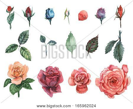 Hand painted watercolor Set of Roses, isolated on white background