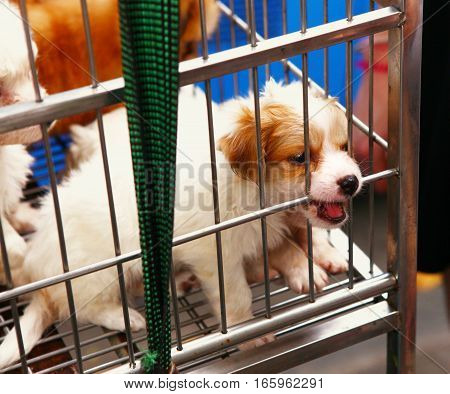 puppy in cage for sale in vietnam street