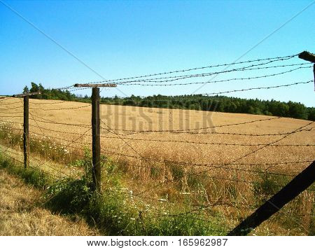 Picture of a barbed wire fence next to a field
