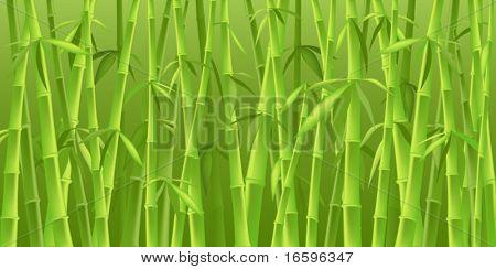 design of chinese bamboo trees, illustration background