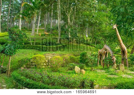 Landscape design of relax tropical garden Vietnam  park Prenn, Dalat city Vietnam October 2016