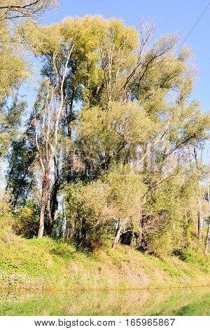 Wild Brenta River